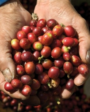 Differences Between Single Origin Coffee And Blends